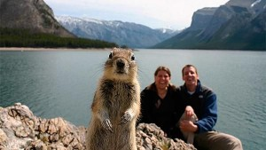 Crasher Squirrel, 1st animal selfie, Alberta, Canada 2009  National Review Online
