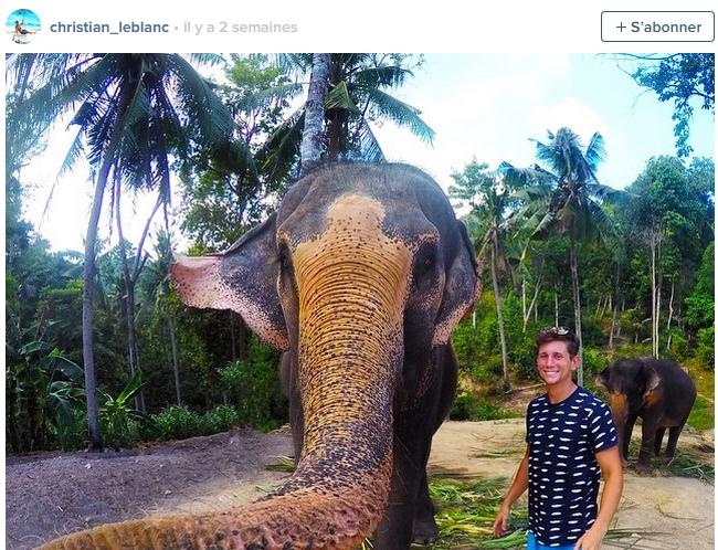 elfie - elefant selfie