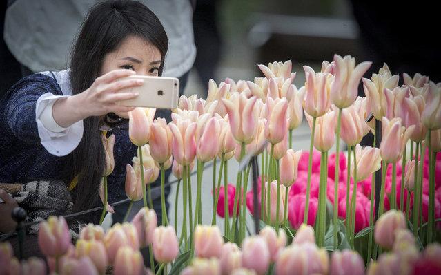 tulip selfie