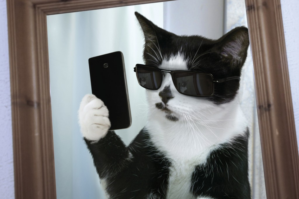 mirror cat selfie