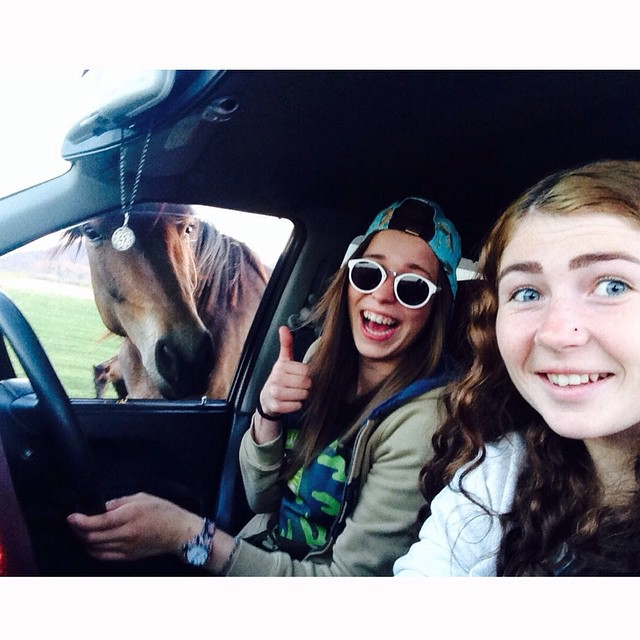 funny horse selfies