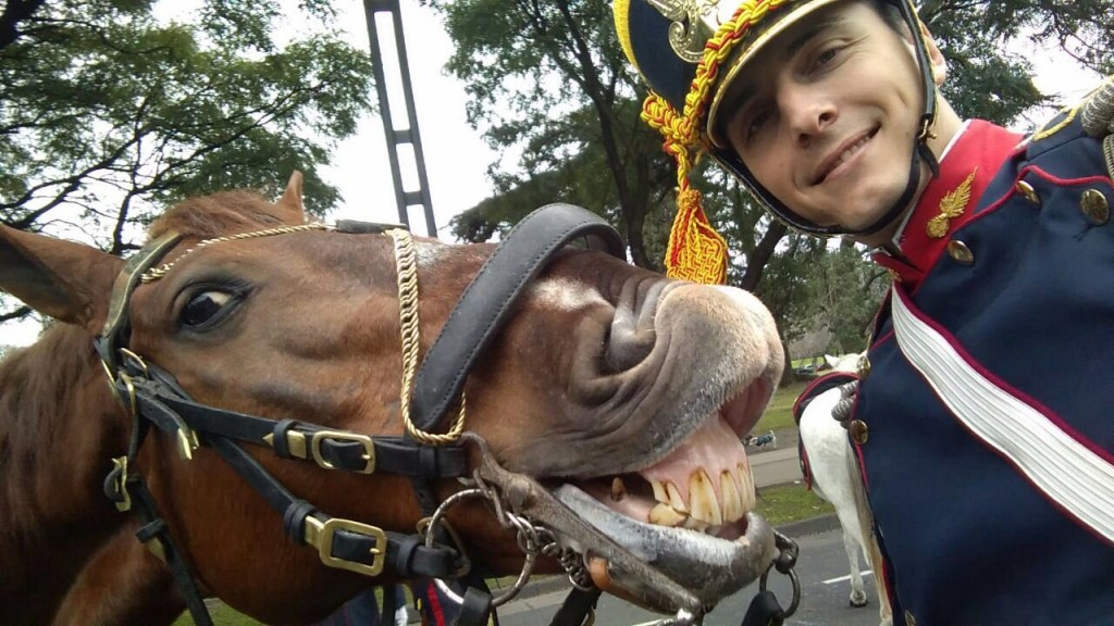 funny horse selfie
