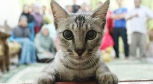 gray cat kitty kitten looking in the camera