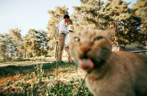 cat spoiling the wedding photo