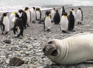 Animal-Selfies