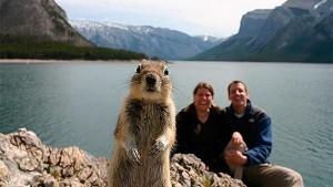 Crasher Squirrel, 1st animal selfie, Alberta, Canada 2009  National Review Online
