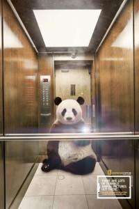 animal selfie panda