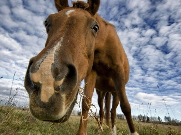 funny horse selfies
