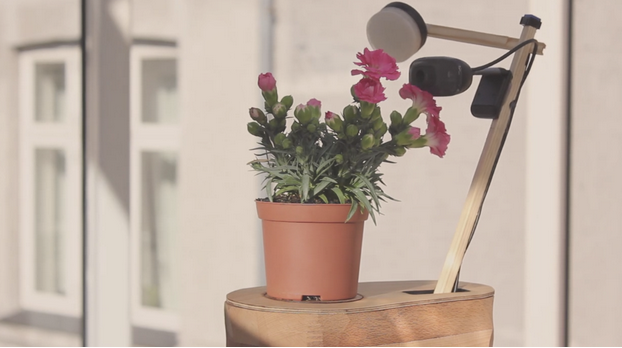 selfie plant